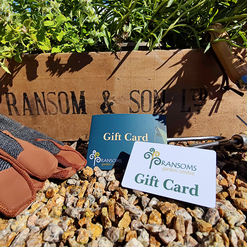 Gift Card for Ransoms Garden Centre in Jersey, Channel Islands